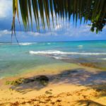 To combat island fever you sometime sneed to leave for a different island. This is a beach in Jamaica with a palm tree overhanging the sand.